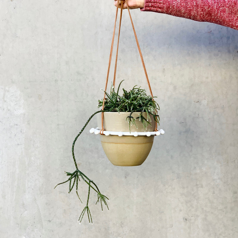 Mistletoe Cactus + Cloud Half Dip Pot + Stud Hanger Black