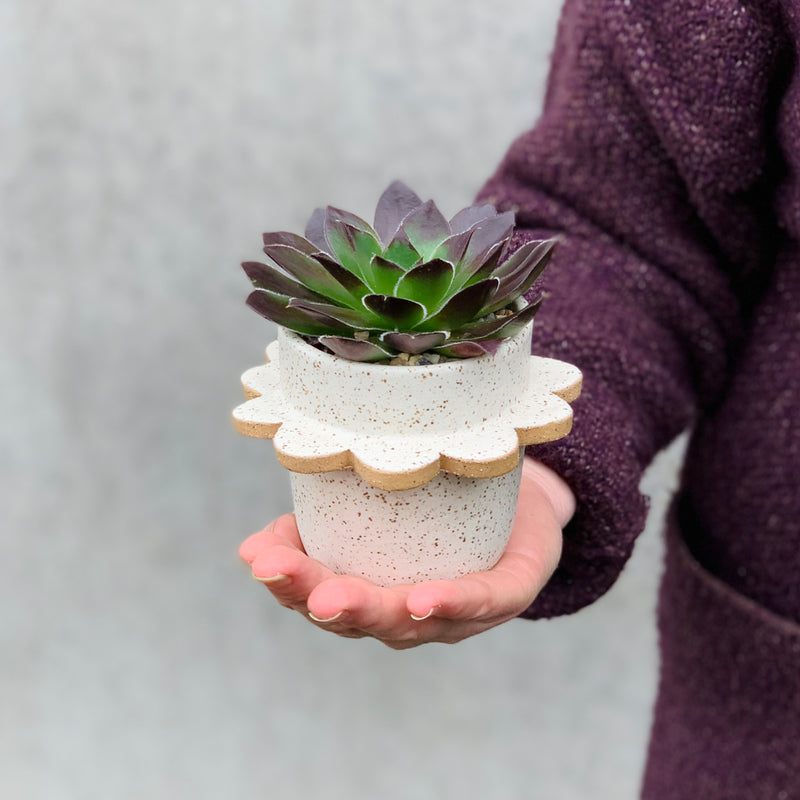 Succulent Potted in Flor Handmade Pot #3