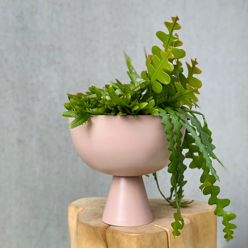 Fishbone Cactus + Lightly Vera Vessel Large Dusty Rose