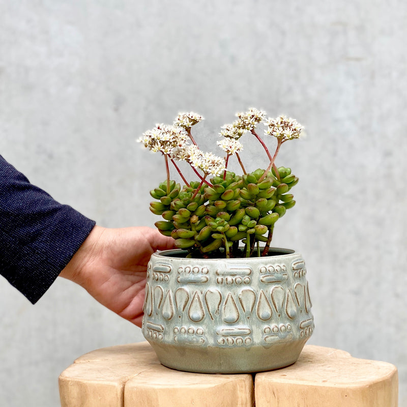 Succulent + Jane Planter