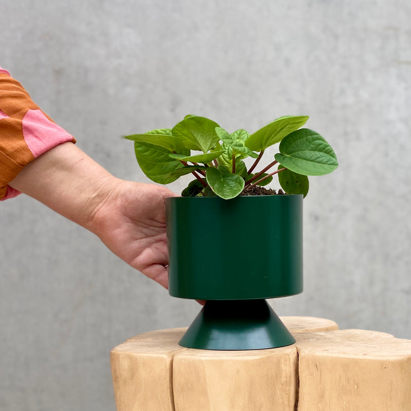 Peperomia Rana Verde + Lightly Palm Springs Planter Mini Forest
