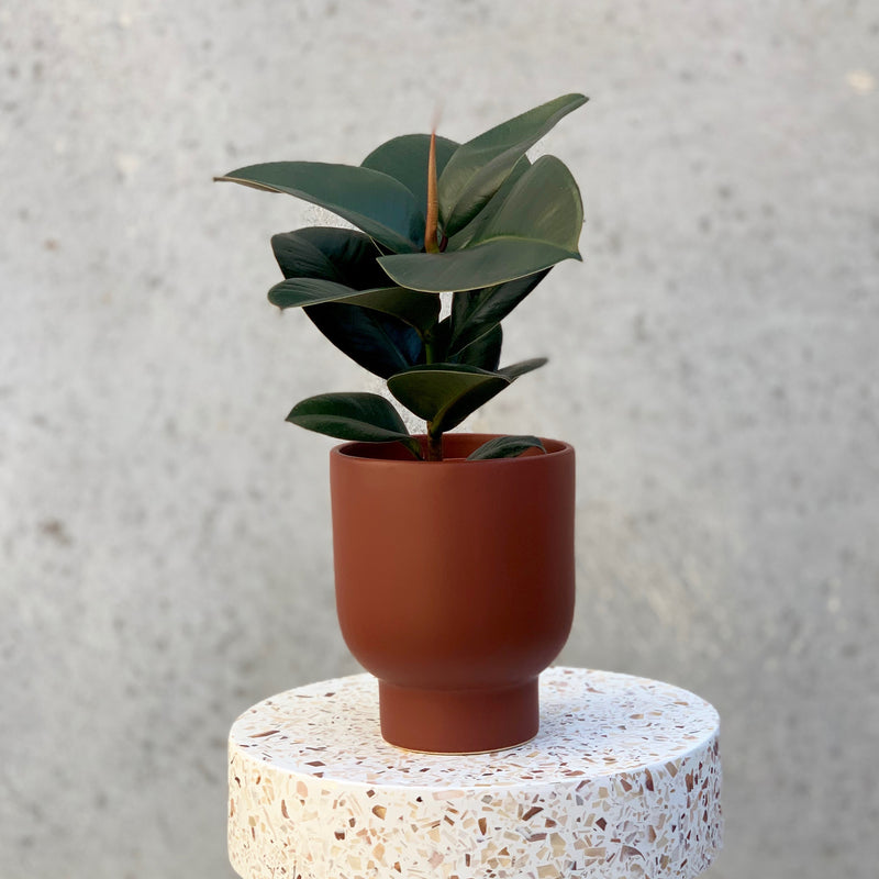 Stockholm Planter Small / Brick (General Eclectic)