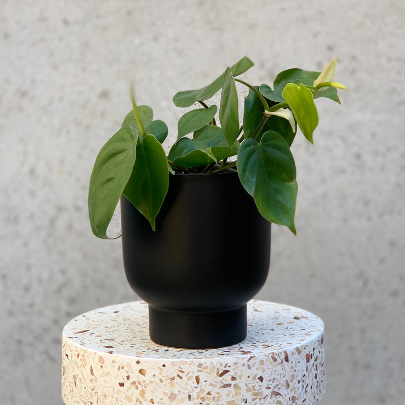 Stockholm Planter Medium / Black (General Eclectic)