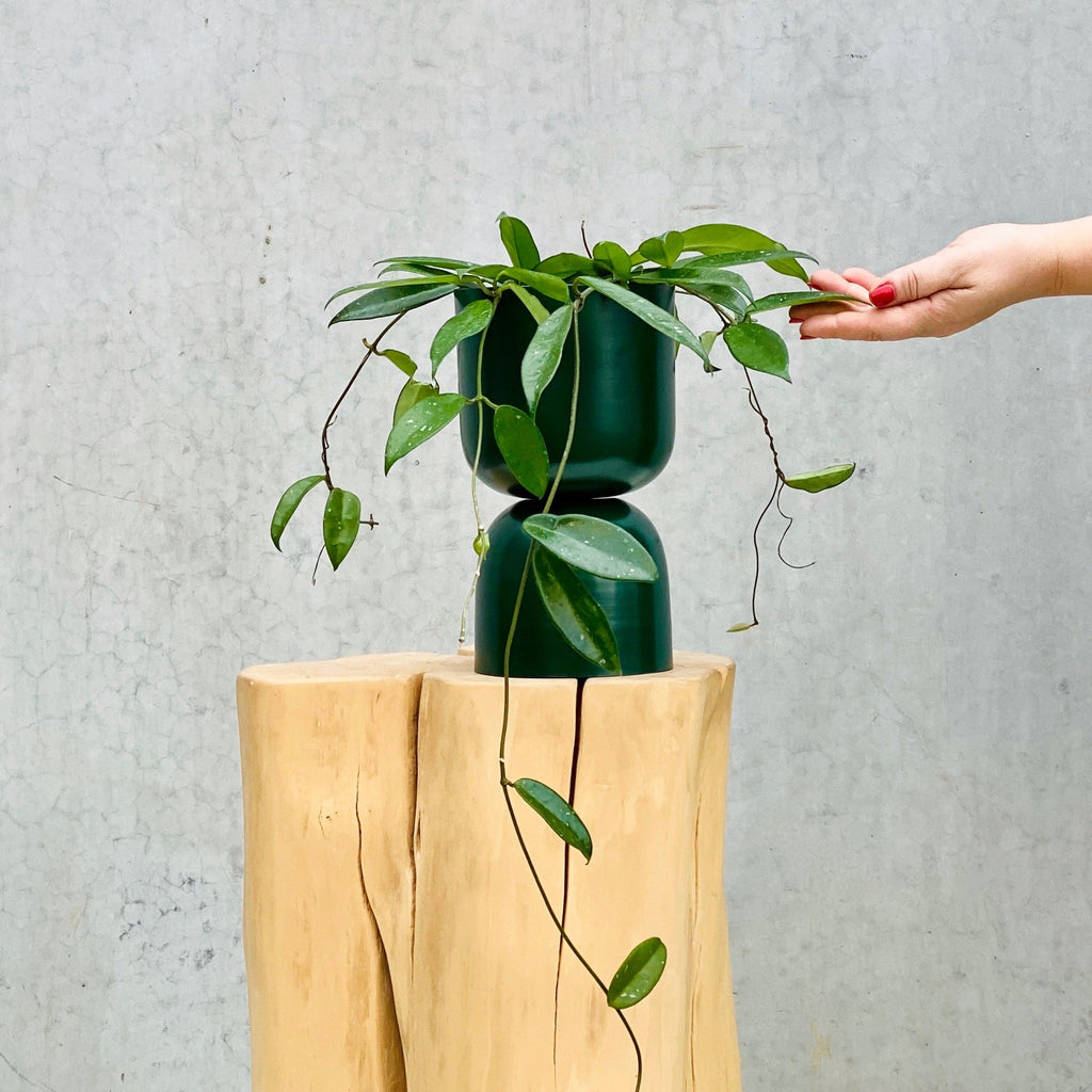 Tone Planter / Forest