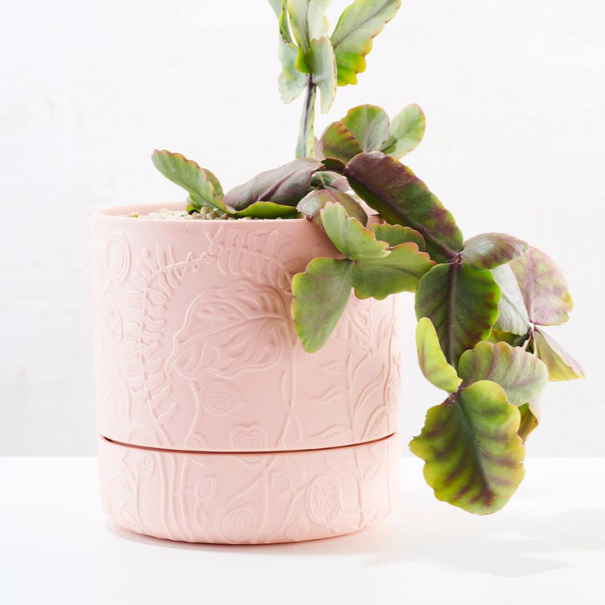 Folia Relief Plant Pot / Coral