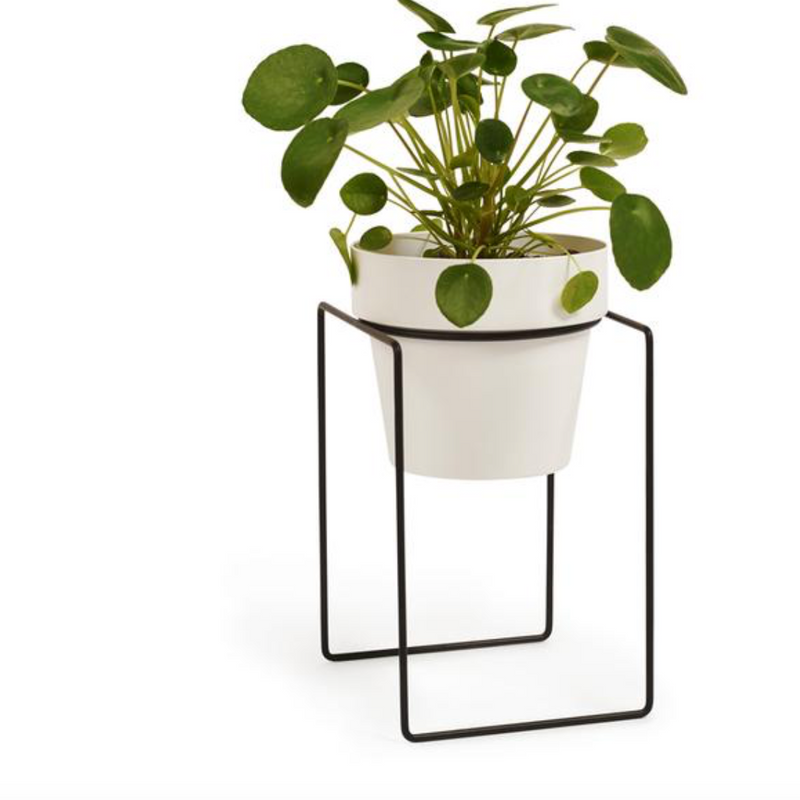 Plant Stand Mini Shrub - Black (Bendo)