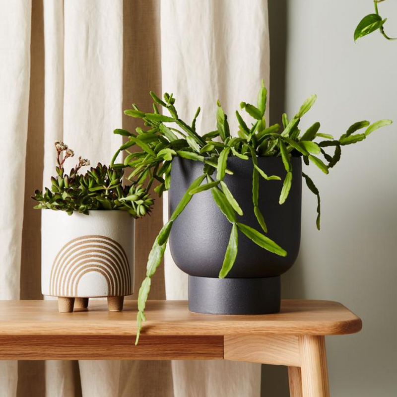 Finch Pot Medium / Charcoal (Evergreen Collective)