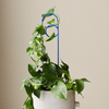 Loop Plant Stake / Clay (Ivy Muse)