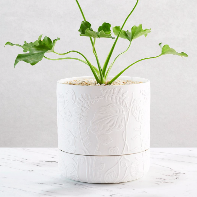 Folia Relief Plant Pot / White (Angus & Celeste)