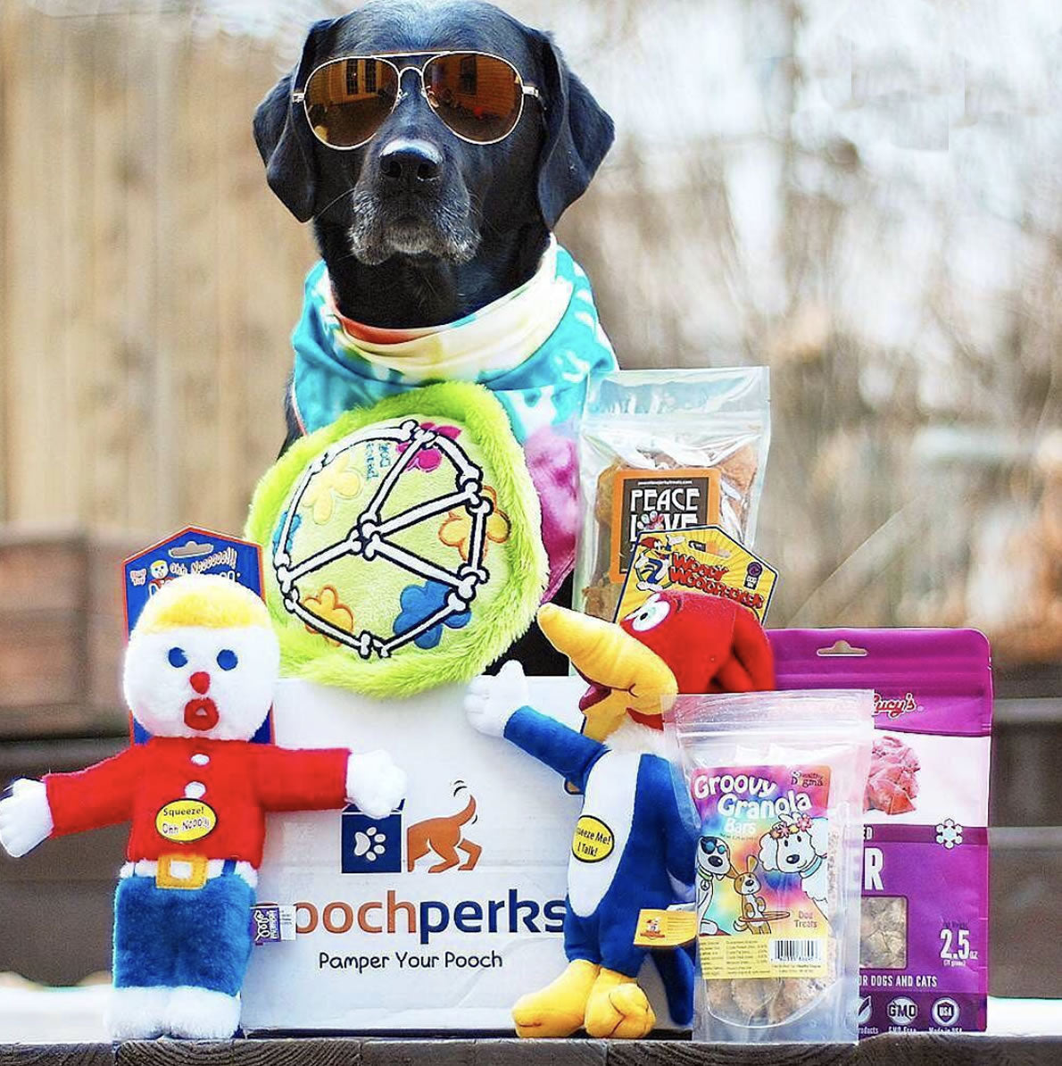 Pooch Perks subscription box for dogs