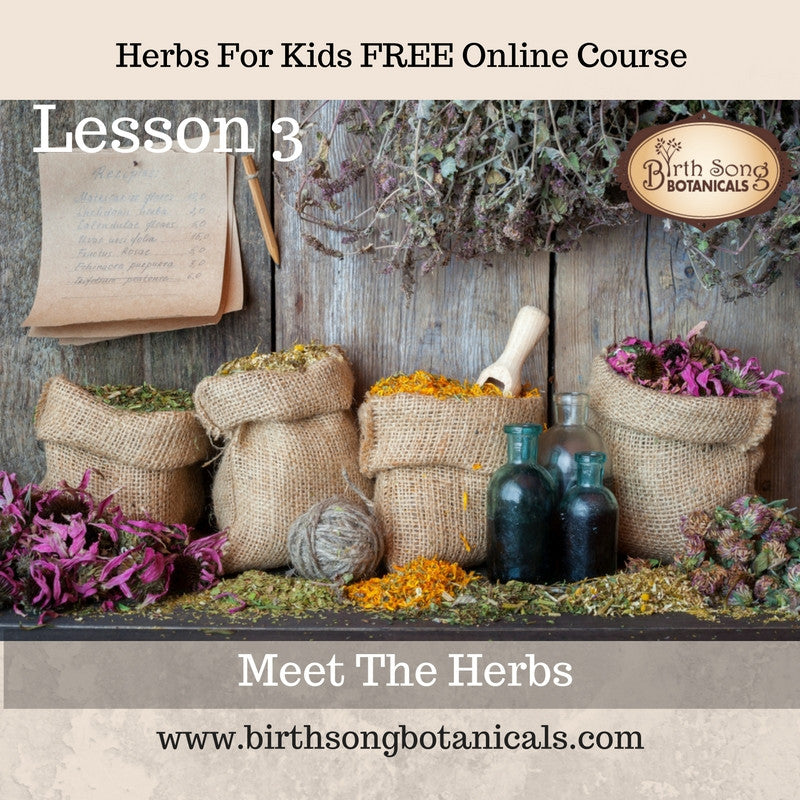 LESSON 3 -Let's Meet The Herbs