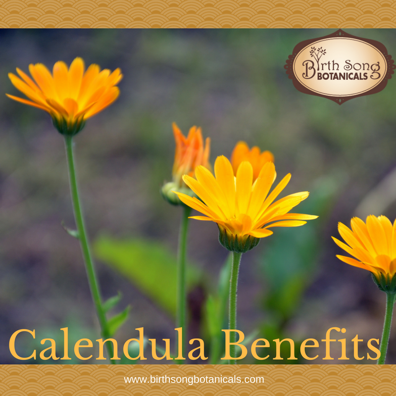 Herb Spotlight: Calendula Benefits