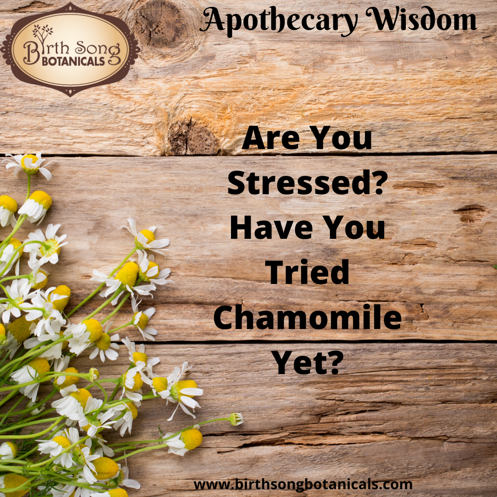 Are You Stressed and Anxious? Have You Tried Chamomile Yet?