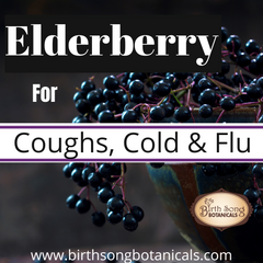 Elderberry: Herbal Respiratory Support for Cough, Cold, and Flu Symptoms