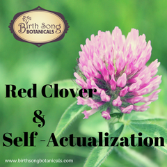 Red Clover- A Nourishing Herb and a Catalyst for Self-Actualization