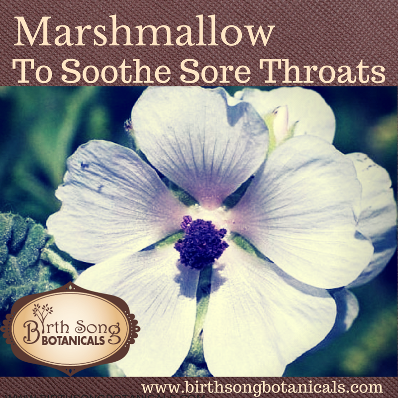 Marshmallow to Soothe Sore Throats