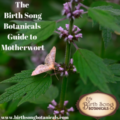 The Birth Song Botanicals Guide to Motherwort