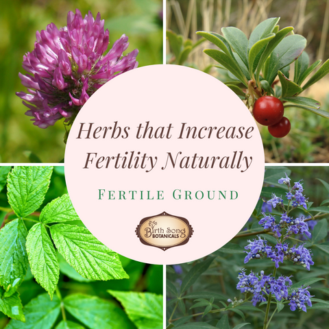 Herbs to increase fertility