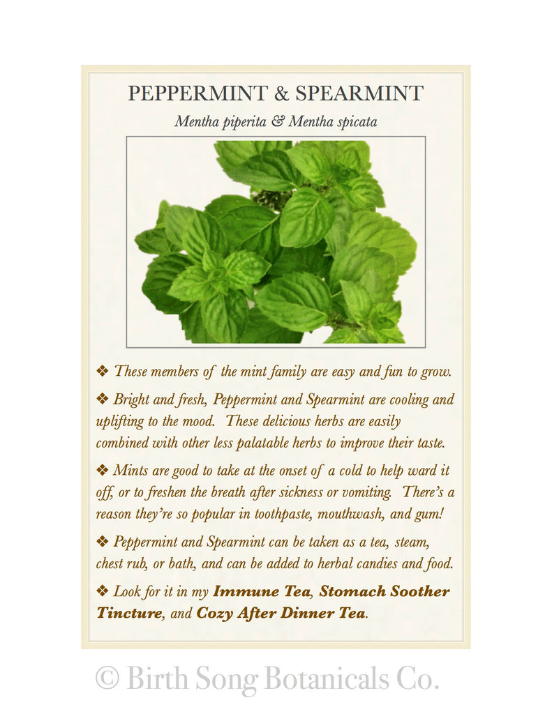 Peppermint & Spearmint