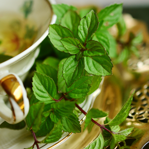 peppermint for stomach ache