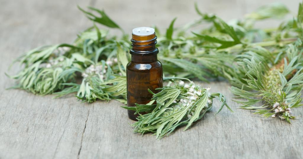 motherwort benefits