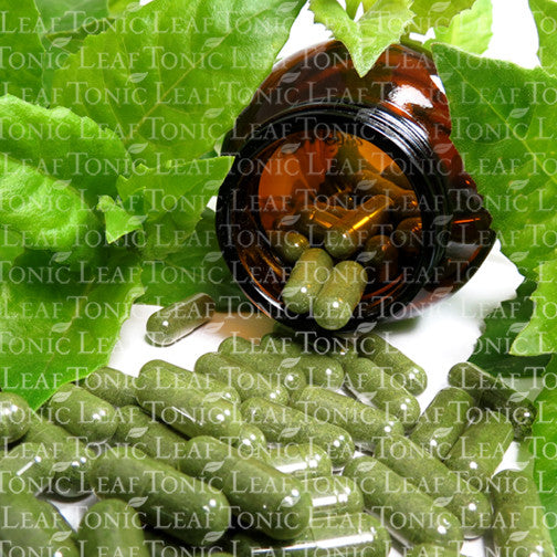 Gynura Procumbens Blood Sugar Support