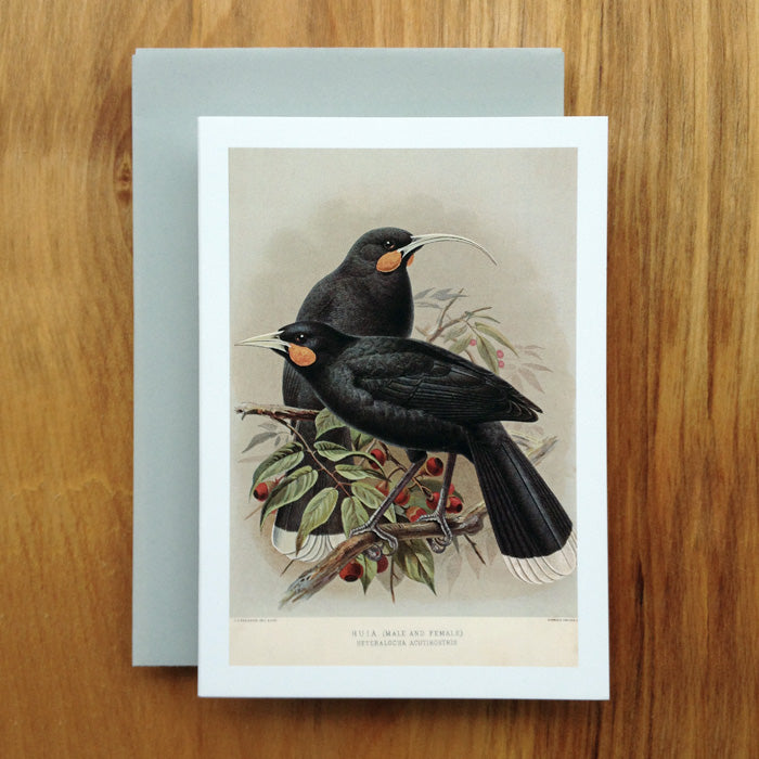 Huia Greeting Card, Buller's Birds