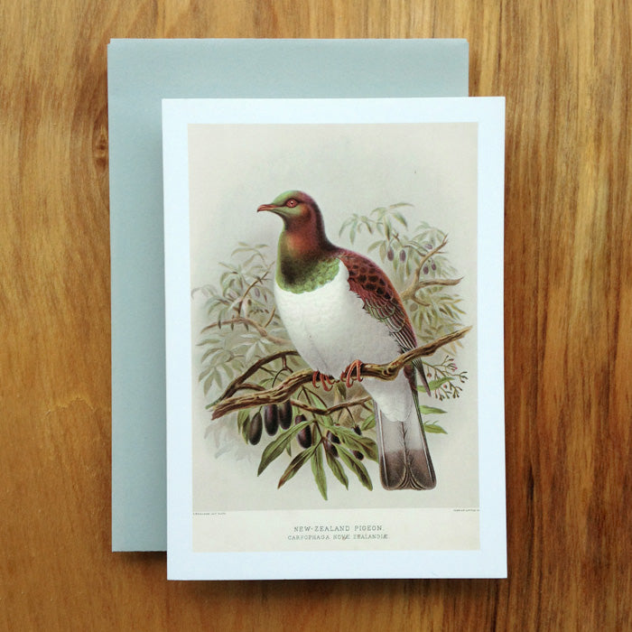 New Zealand Pigeon Greeting Card