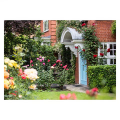 20 Maresfield Gardens with roses grown by Anna Freud (postcard)