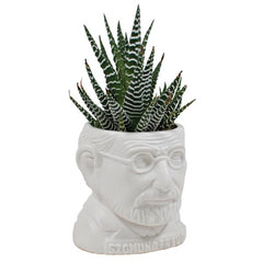 Sigmund Freud sculpture as a Ceramic Planter for a mini cactus (not sold with cactus)