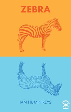 Zebra by Ian Humphreys