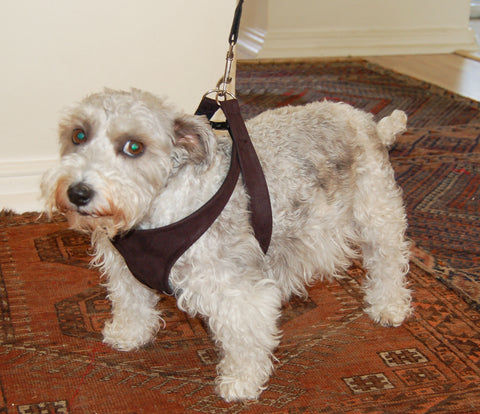 Ariel modelling the Medium Size Harness