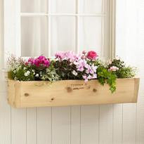 Window Box - Original