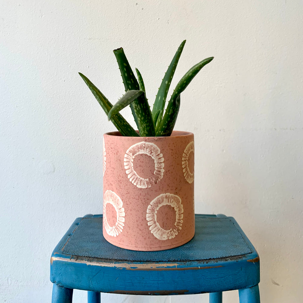 Aloe in a Decorative Terracotta Pot