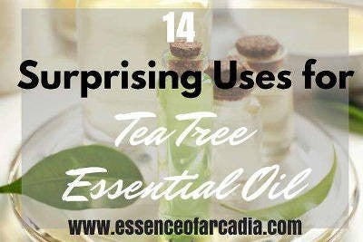 14 Surprising Everyday Uses For Tea Tree Essential Oil