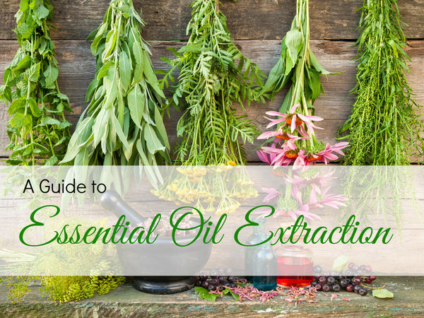 A Guide to the Extraction of Essential Oils