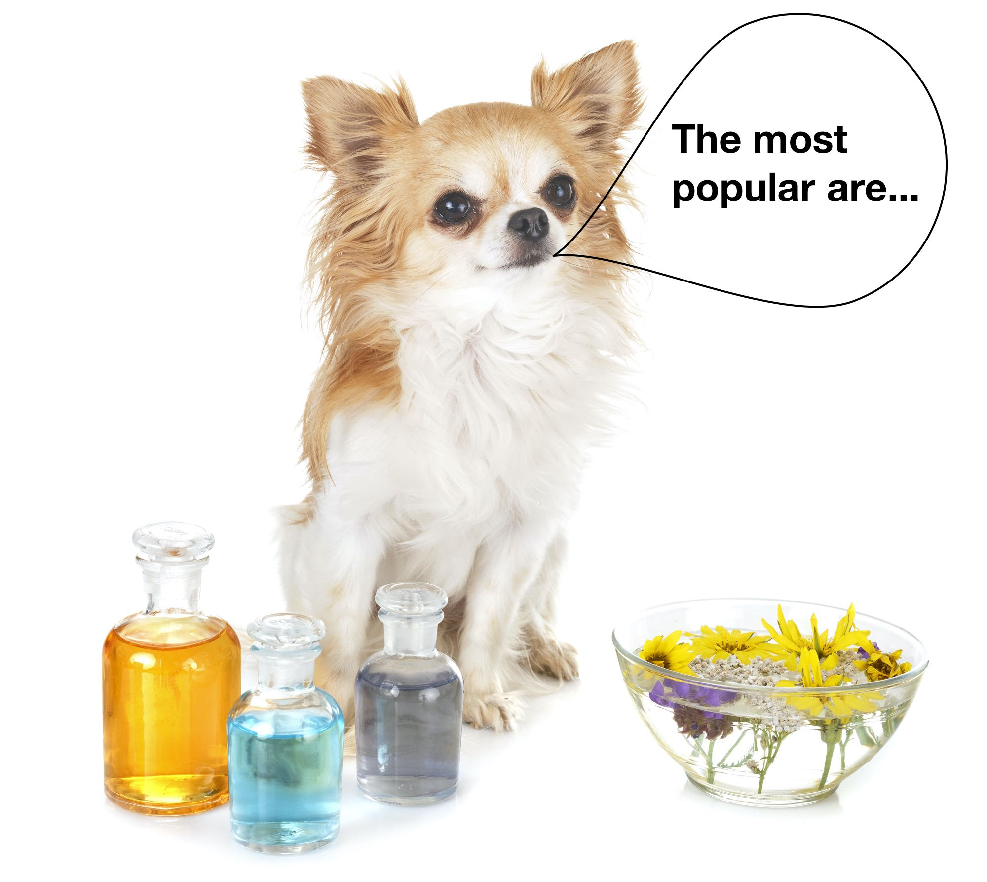 A dog standing behind an array of essential oils with a speech bubble saying: The most popular essential oils...