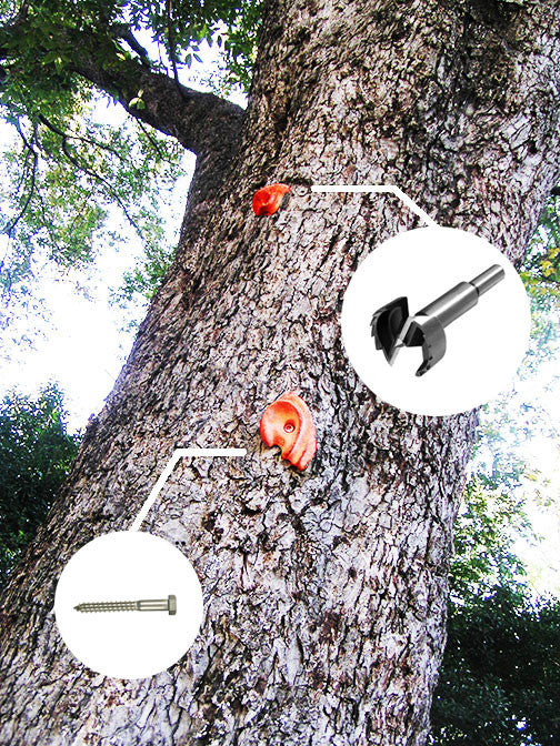Can I put climbing holds on a tree?