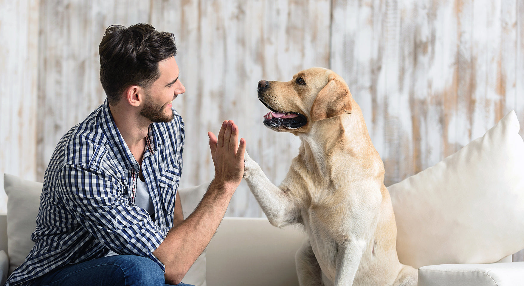 A Dog's Communication - Could Your Dog Be Trying to Tell You Something?