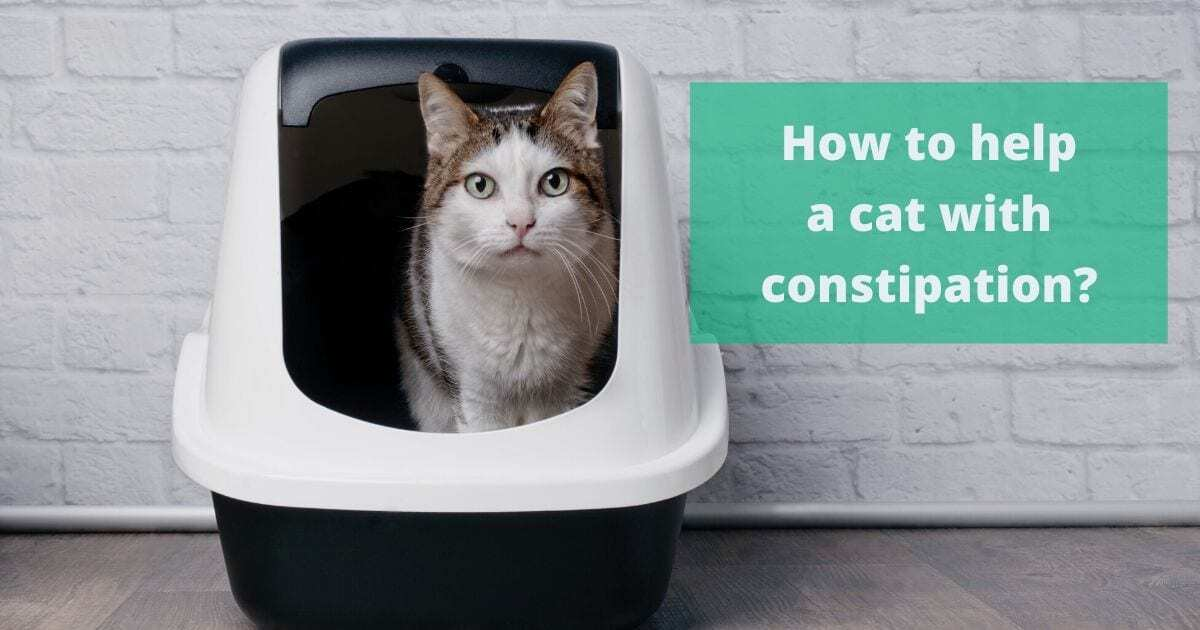 Home Remedies to Cure Constipation in Cats