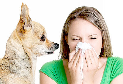 Allergic To Your Dog Or Cat?