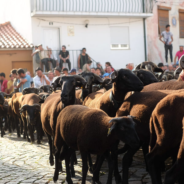 Portugal Travels pt 4: São João's Day Sheep Blessing