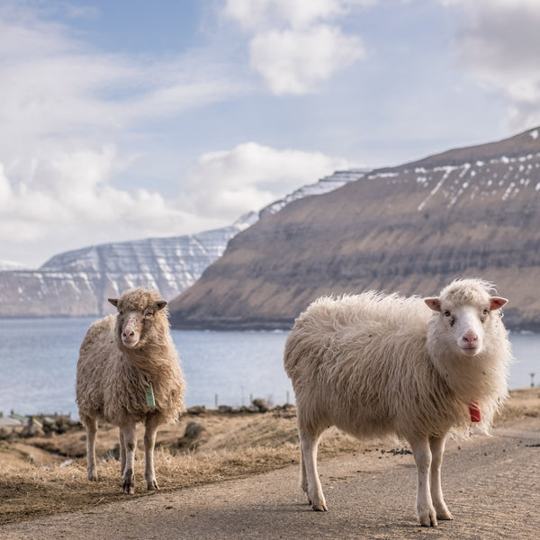 Fancy Tiger Travels to the Faroe Islands, Part 1: Introduction