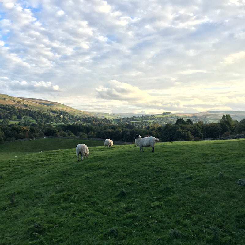 Amber & Jaime Visit the Yorkshire Dales: Wool in the Dales