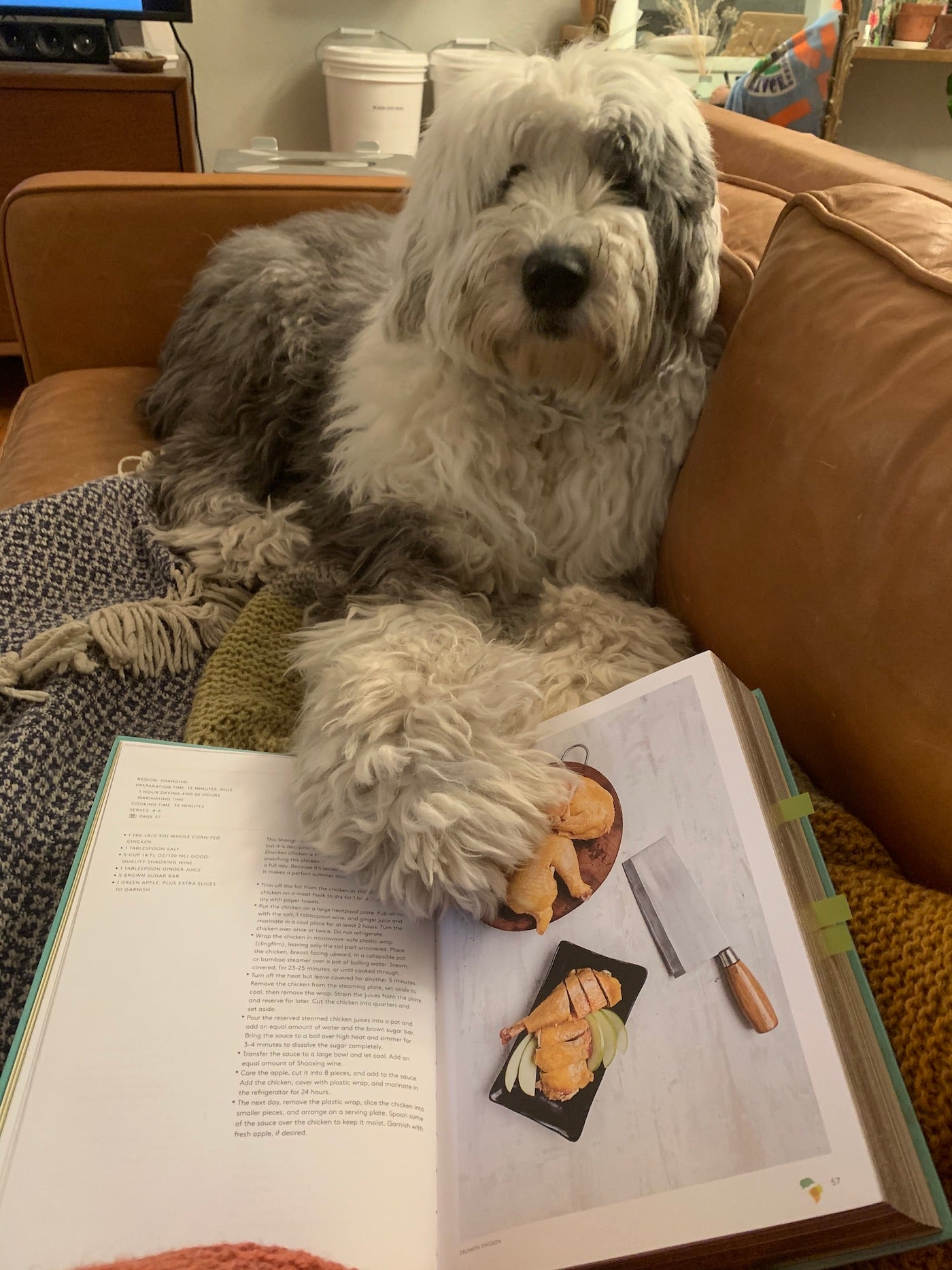 Sheepdog with book