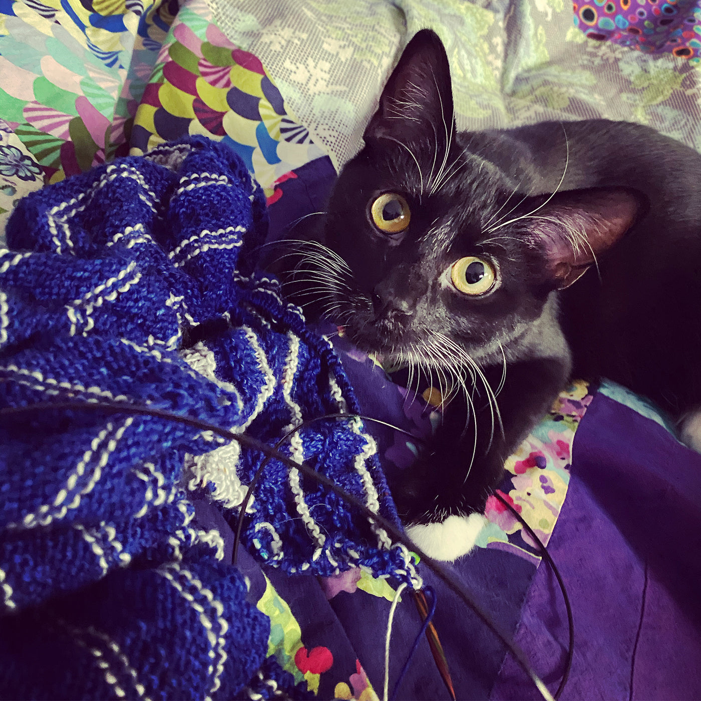 Cat with knitting