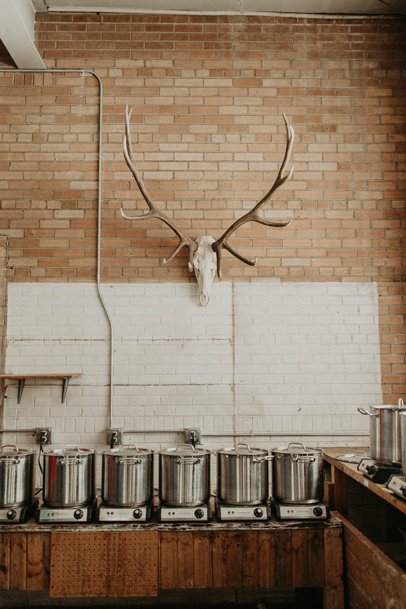 Deer skull on brick wall
