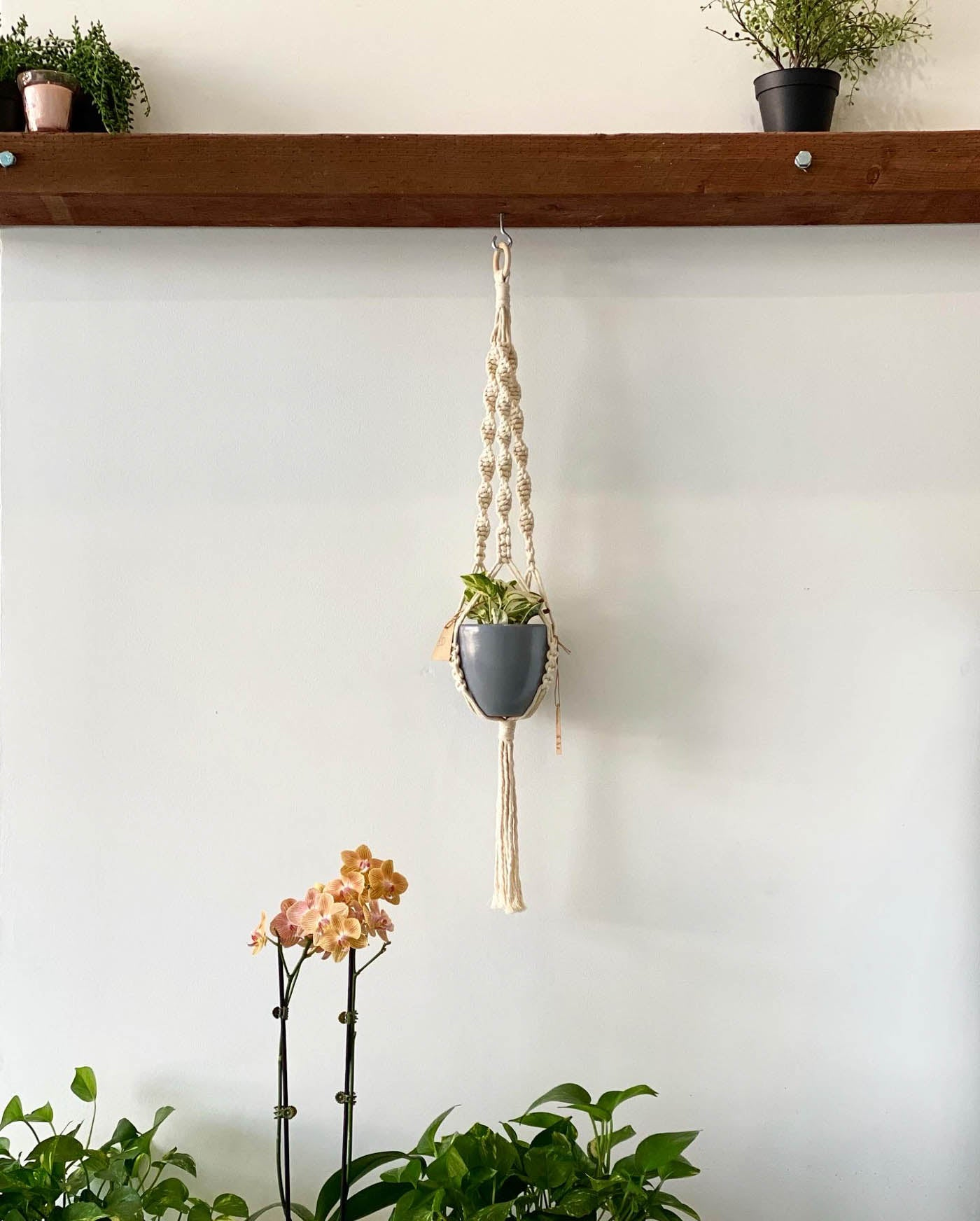 Plant hanger and shelf