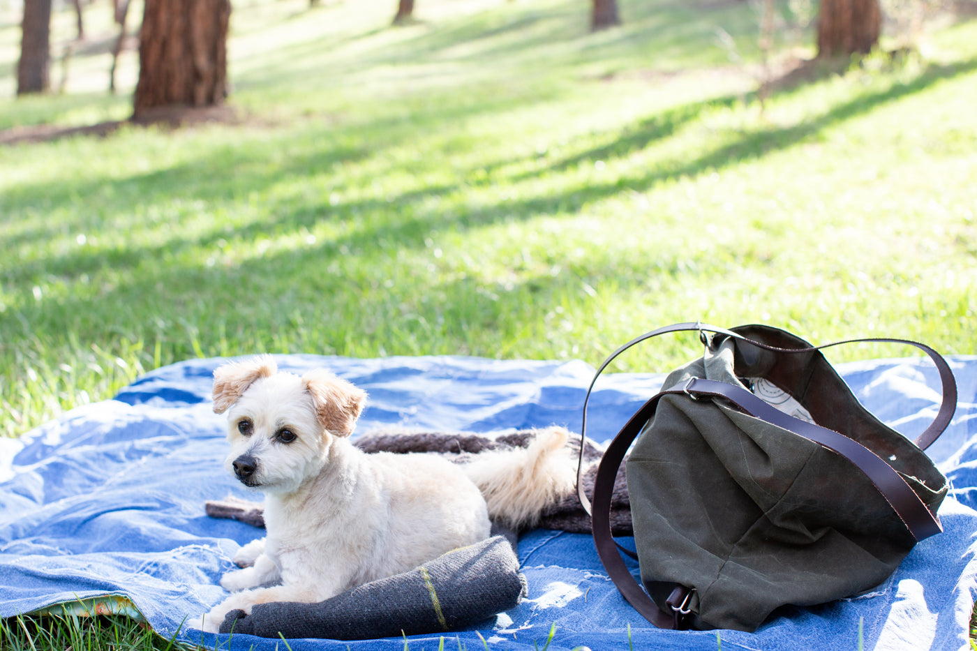 Photograph of a dog laying on a jean blanket in the grass with a evergreen waxed bag sitting beside the dog.