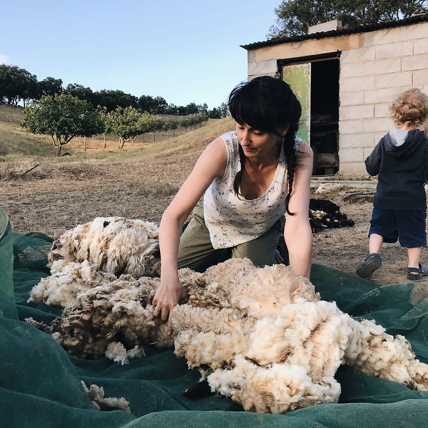 Rosa sorting freshly shorn fleece for yarn